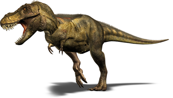 1.) Tyrannosaurus Rex (extinct 65 million years ago): the T-Rex was one of the largest land carnivores of all time, although not the biggest. Unlike the T-Rex you may see in pop culture, the actual dinosaur may have been covered in feathers.