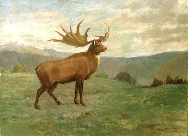 5.) Irish Deer (extinct 7,700 years ago): this was the largest deer that ever lived. The Giant Deer lived in Eurasia, from Ireland to east of Lake Baikal, during the Late Pleistocene and early Holocene.