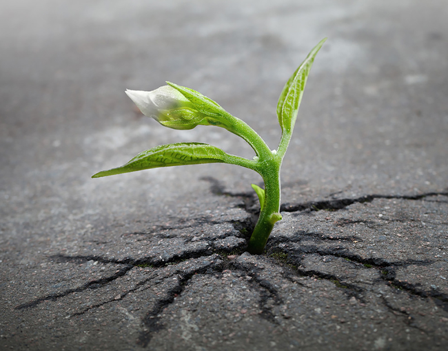 Over time, even the pavement couldn't stop this little sprout.