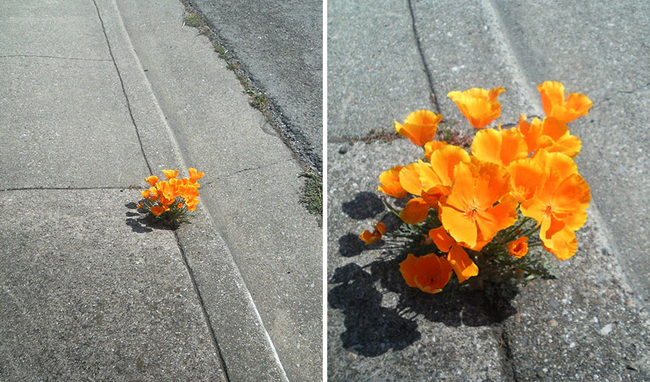 It's like a perfect little street bouquet.