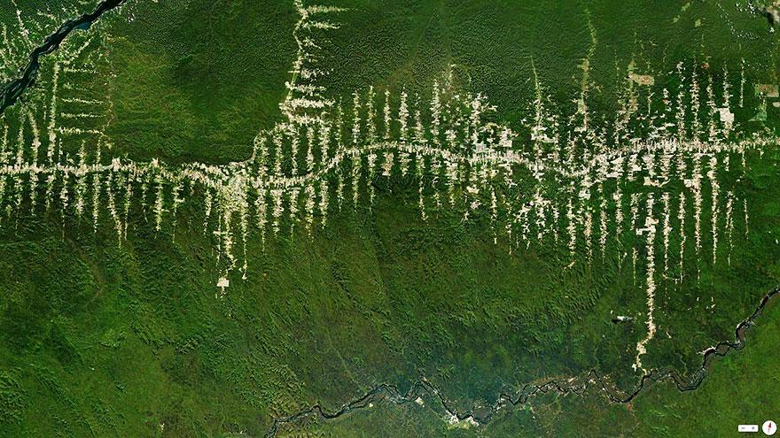 Amazon Rainfores, Para, Brazil