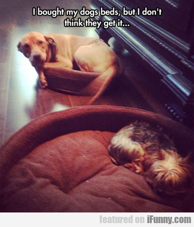 I Bought My Dogs Beds, But I Don't Think They..