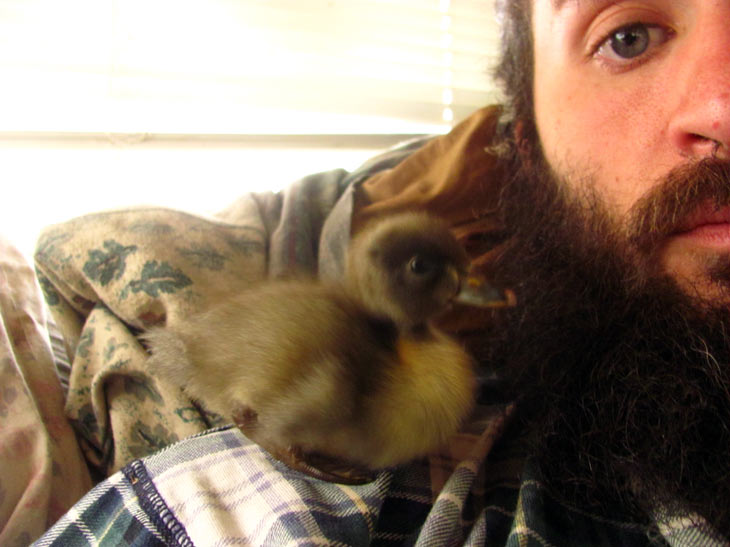Letting Peeps hang out on his shoulder and in his beard had some pooping issues...