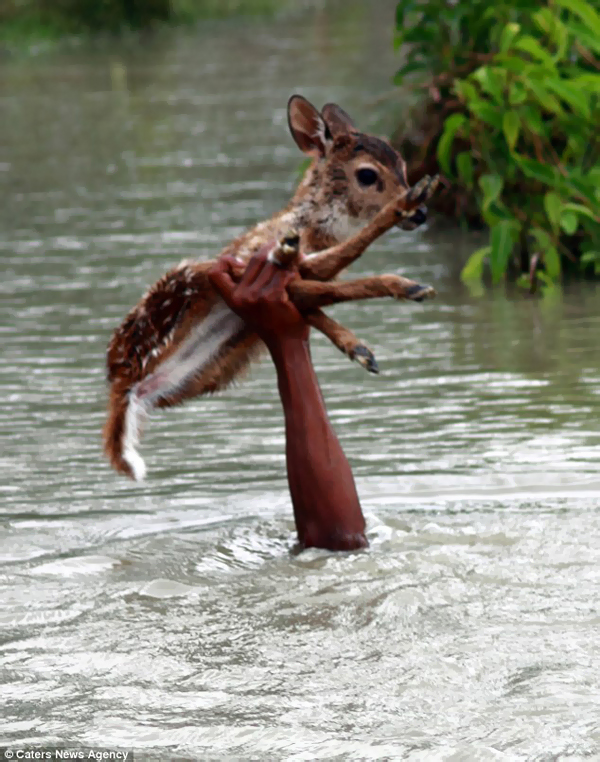 He grabbed the baby deer and held him above his head.
