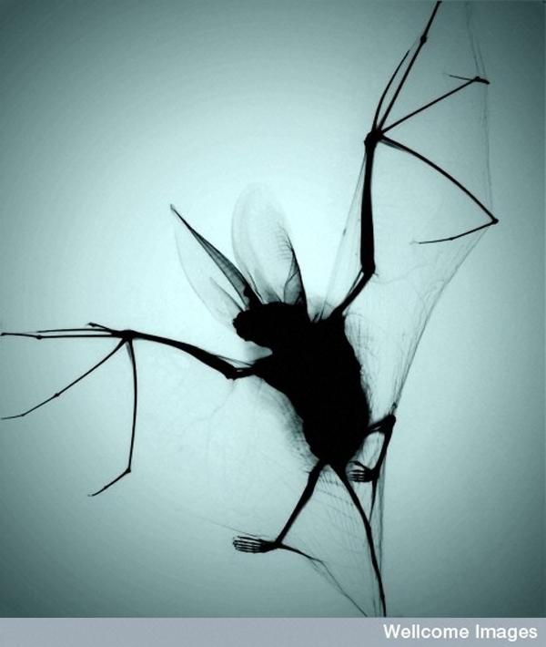 4.) Okay, bats are still pretty nightmarish.