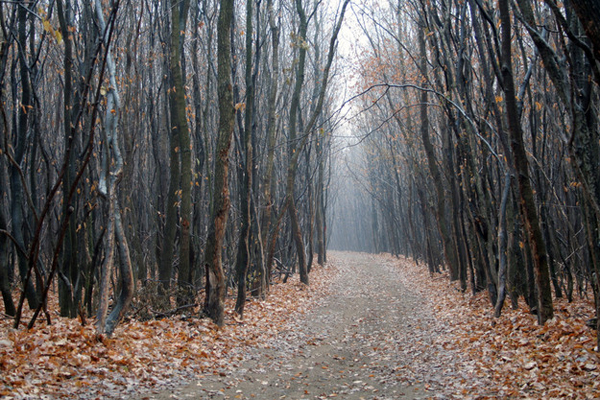 "1.) Hoia Baciu Forest (Romania): This forest is known as the ""Bermuda Triangle"" of Romania. Multiple people have gone missing in it, people have sighted UFOs, there has been unexplained electrical phenomena and more."