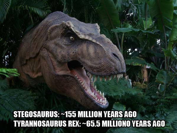 5.) We lived closer to the Tyrannosaurus Rex than the Stegosaurus did: The Jurassic-period Stegosaurus had been extinct for about 80-90 million years before the T-Rex. It has been extinct for only about 65.5 million years.
