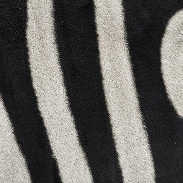 4.) Zebra.