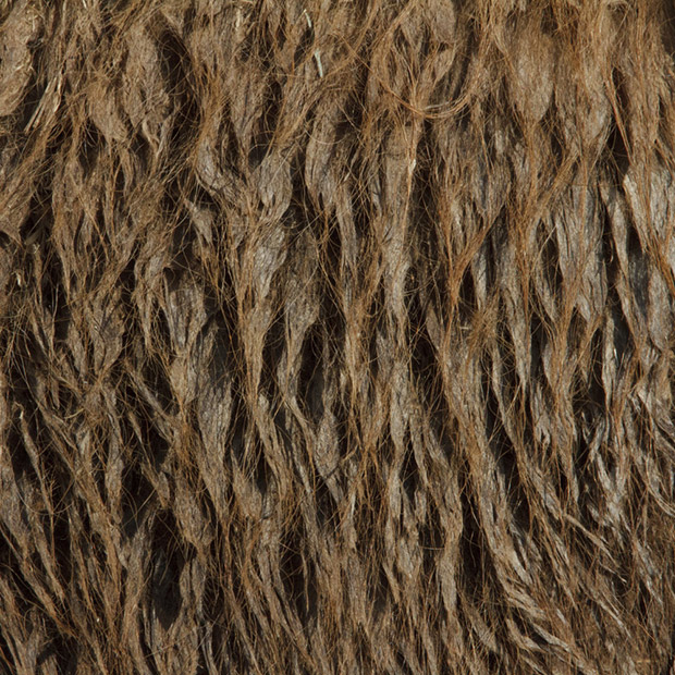 13.) Bactrian camel.