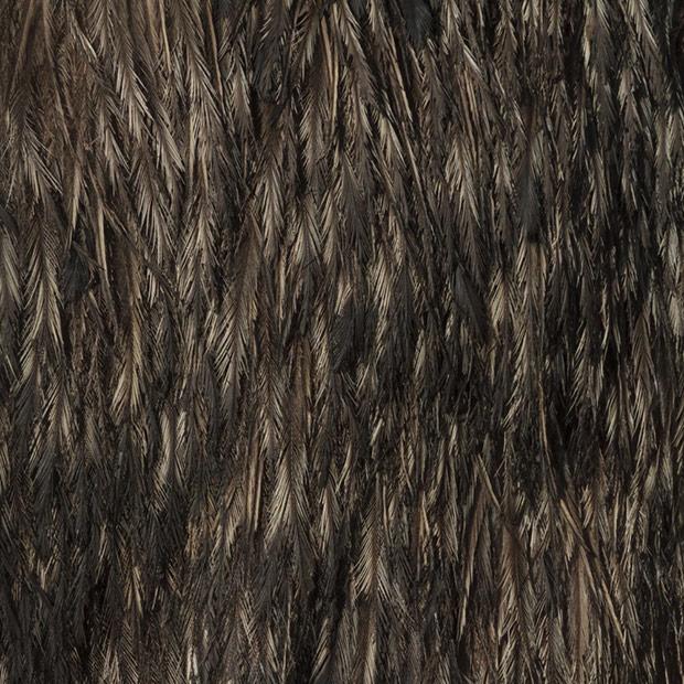 15.) Emu.