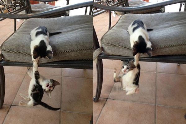 These kitties decided - completely on their own - to give it a try. Adorable.