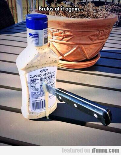 Brutus At It Again...