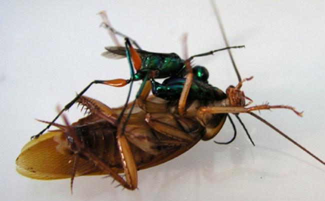 7.) Cockroach Cradle Zombie