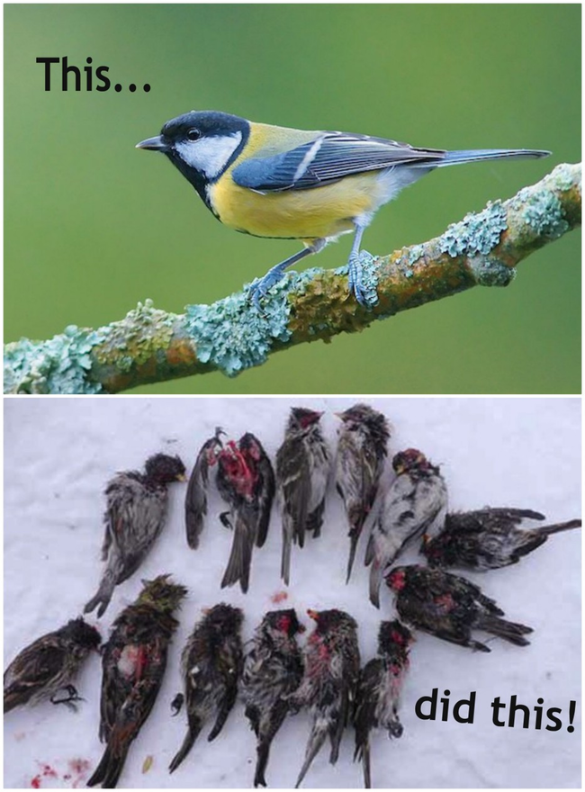 13.) Flesh-Eating Zombie Birds