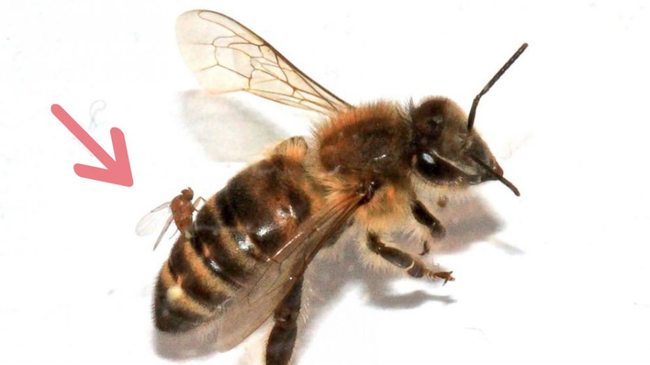 8.) Drunken Zombie Bees