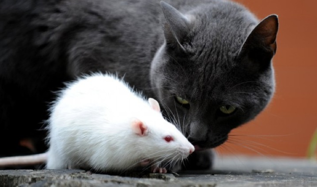 4.) Zombie Rat... and Humans.