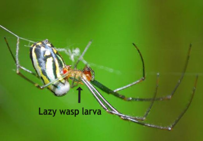 3.) Psychotic Spider Zombie