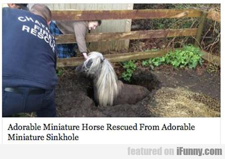 Adorable Miniature Horse Rescued...