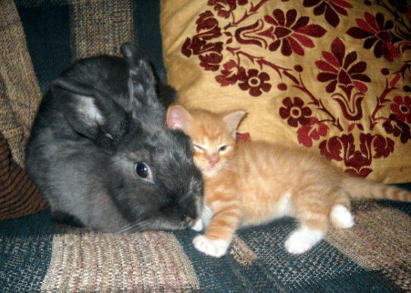 11.) Fuzzy + fuzzy = extra fuzzy.