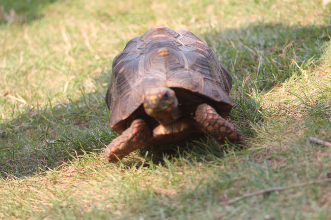 6.) Manuela The Turtle.