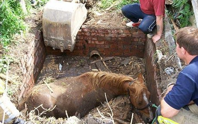8.) People about to free a horse that's stuck in a slurry pit.