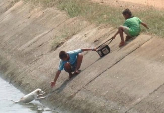 3.) Two boys work together to save a puppy.