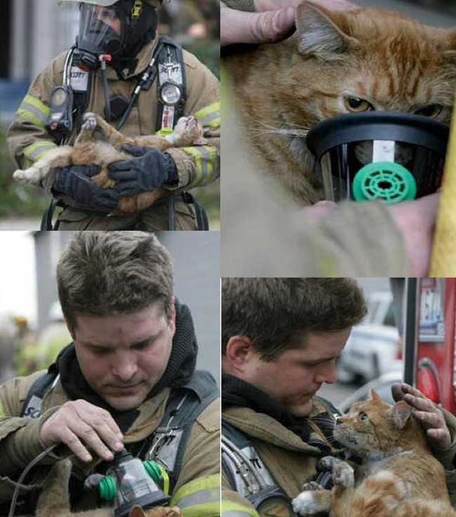 5.) Firefighter gives cat oxygen from his own mask.