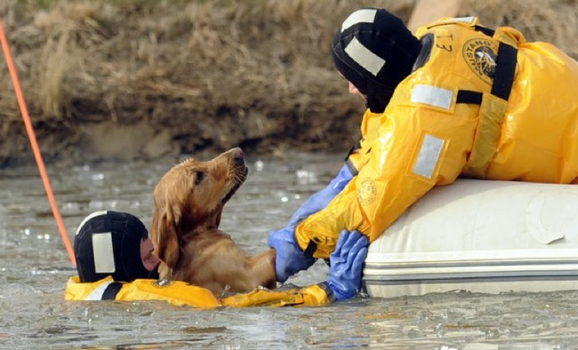 6.) Dog is pulled to safety from a treacherous river.