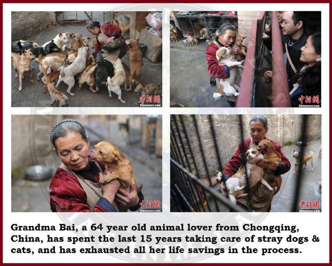 9.) Woman takes care of the stray animals in her neighborhood.