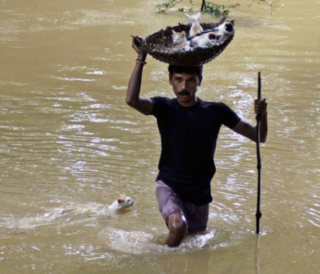 14.) A resident of Cuttack City, India rescues kittens from a flood.