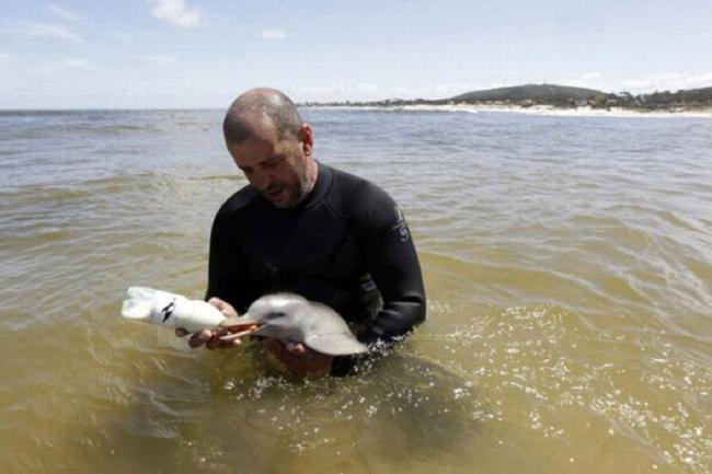 17.) Rescuer nurses a baby dolphin.