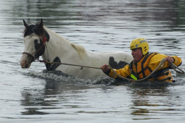 16.) A horse is led from high flood water.