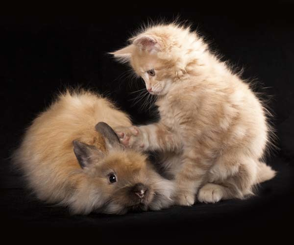 """4.) Here are two kittens (baby rabbits are """"kits"""" or """"kittens"""")."""