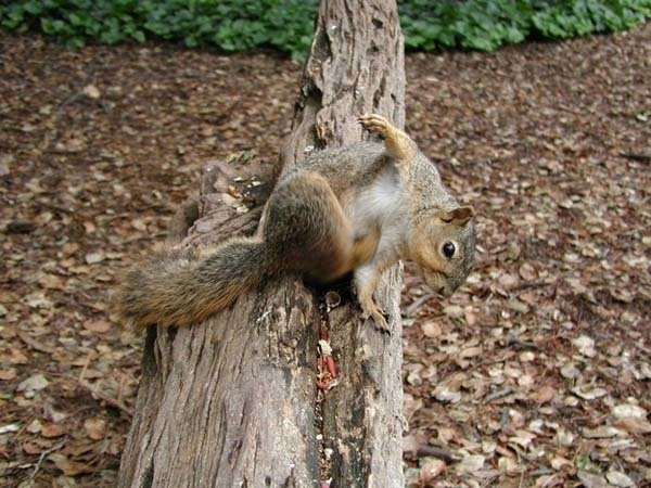 3.) Millions of trees grow every year because grey squirrels bury their nuts.