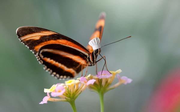 5.) Butterflies taste with their feet.