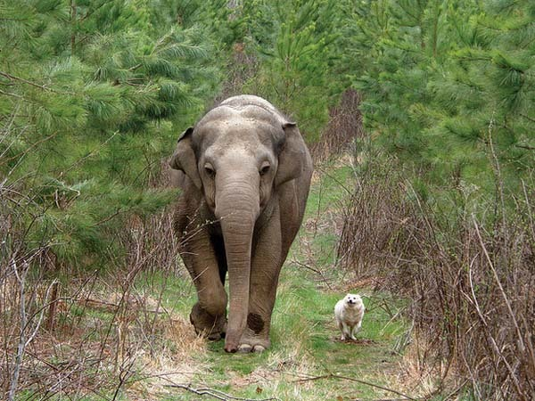 15.) Elephants show incredible empathy for others, even different species.