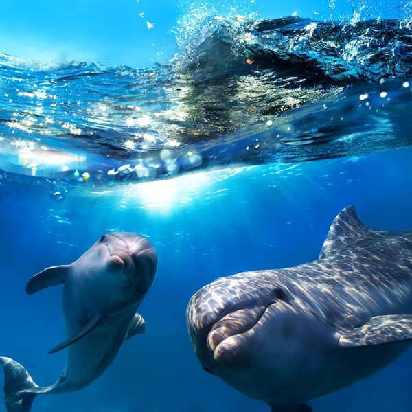 18.) Dolphins have names for each other and can call out for each other specifically.