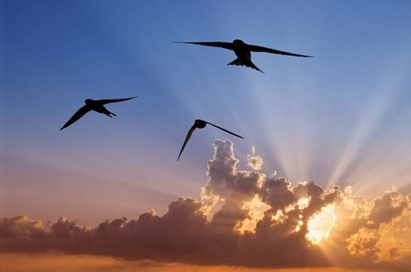 20.) Aside from when nesting, a common swift will spend its entire life in the air (even eating insects up there).