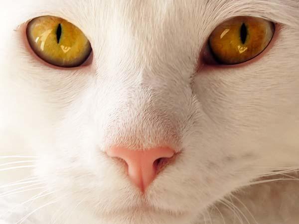 17.) A cat's nose imprint is unique like a human fingerprint.