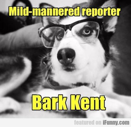 Mild Mannered Reporter