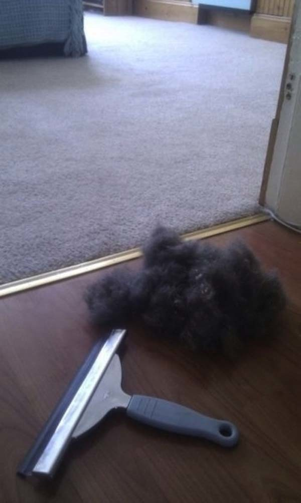 7.) A normal window squeegee can help remove hair from carpet.