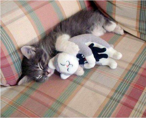 1. Kitten spooning is the best.