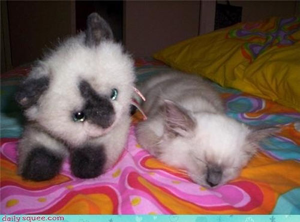 15. So fluffy!