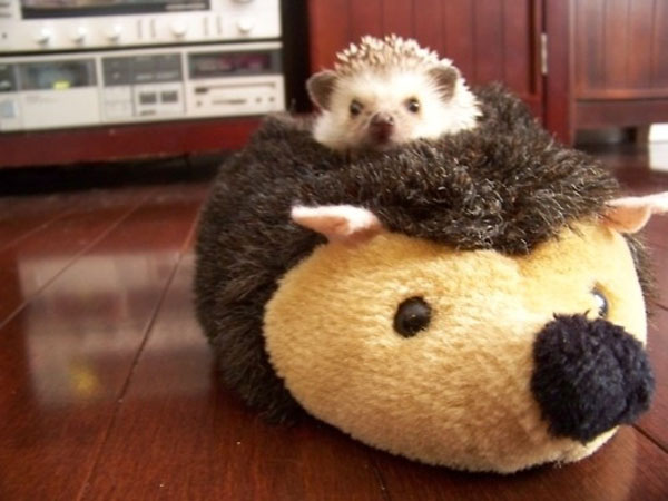16. He loves his big fluffy, fake older brother.