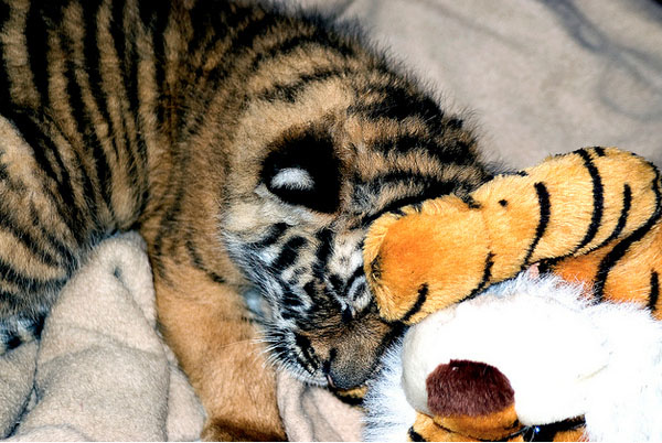 22. Even the fiercest creatures like a stuffed animal.