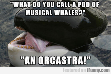 What Do You Call A Pod Of Musical Whales?