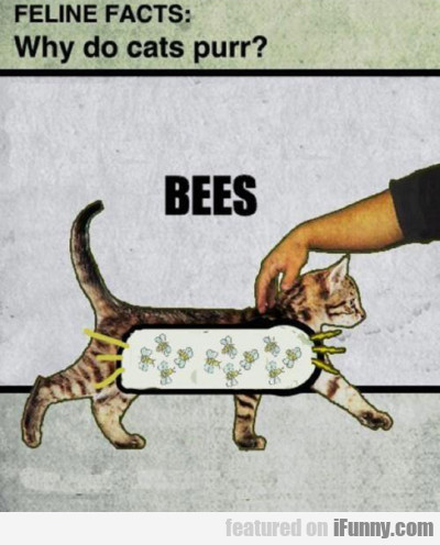 Feline Facts: Why Do Cats Purr? Bees