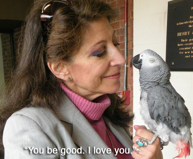 """3.) """"You be good. I love  you.""""--The last words of Alex the grey African parrot. Alex had a close relationship with his owner Irene and wanted to express it before he passed away in 2007."""