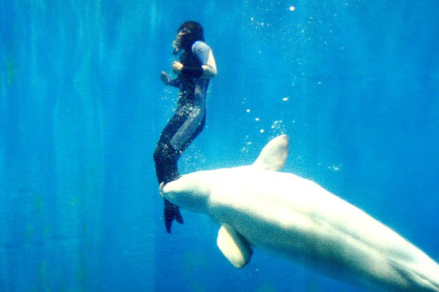 4.) During a diving contest, Yang Yun thought she was going to die when the arctic temperatures of the water paralyzed her legs. Luckily, Mila was there to save her. The beluga whale used her nose to push her to the surface.