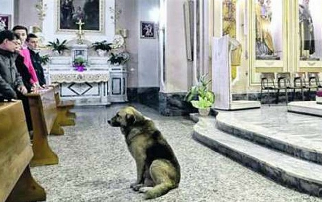 10.) Every Sunday Tommy's owner would bring the dog to mass with him. When his owner died, Tommy decided to keep that tradition. The priest of the church says that Tommy keeps the service sacred, never barking or being disruptive in any way. He just sits quietly and takes in the memories.